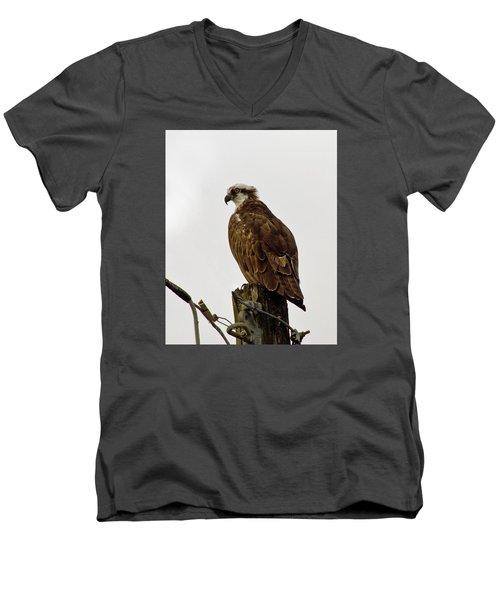 Ollie, The Osprey Men's V-Neck T-Shirt