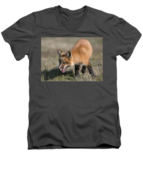 Men's V-Neck T-Shirt featuring the photograph On The Prowl by Elvira Butler