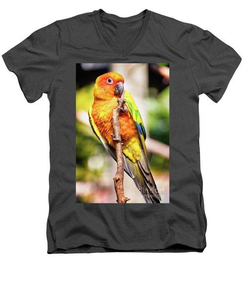 Orange Yellow Parakeet Men's V-Neck T-Shirt