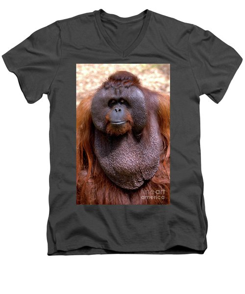 Orangutan Portrait Men's V-Neck T-Shirt