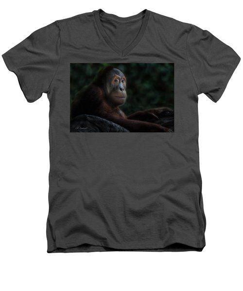 Orangutan Session Men's V-Neck T-Shirt by CR  Courson