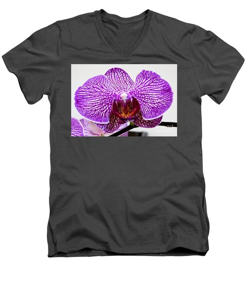 Orchid Men's V-Neck T-Shirt by Tim Townsend