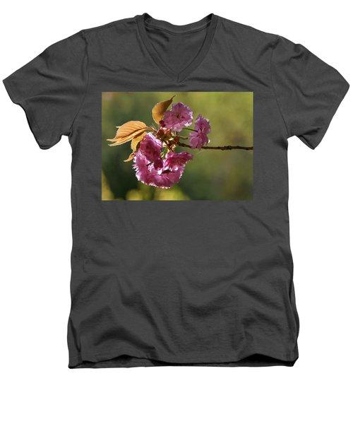 Ornamental Cherry Blossoms - Men's V-Neck T-Shirt