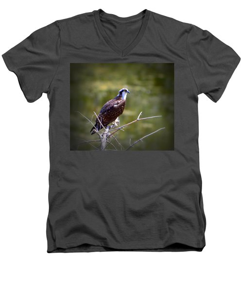 Osprey In Wait Men's V-Neck T-Shirt by Josephine Buschman