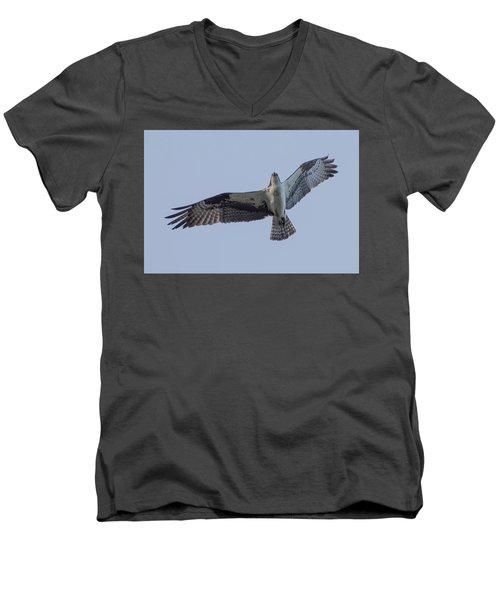 Osprey Men's V-Neck T-Shirt by Keith Boone