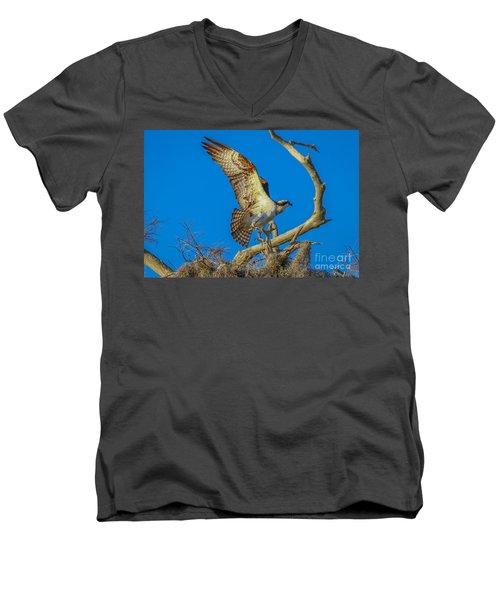 Osprey Landing On Branch Men's V-Neck T-Shirt by Tom Claud