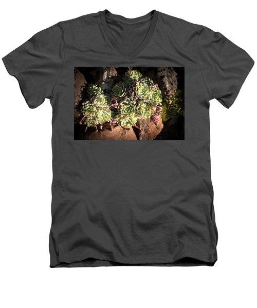 Men's V-Neck T-Shirt featuring the photograph Out Door Succulents by Catherine Lau