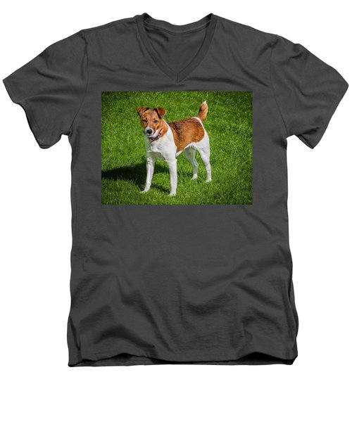 Men's V-Neck T-Shirt featuring the photograph Parson Jack Russell by Nick Bywater