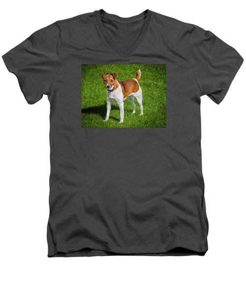 Parson Jack Russell Men's V-Neck T-Shirt