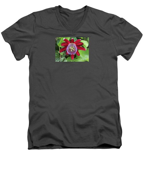 Passiflora Ruby Glow. Passion Flower Men's V-Neck T-Shirt