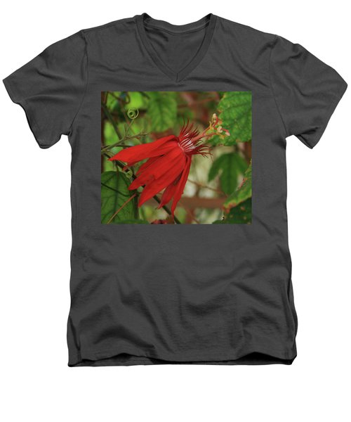 Passion Men's V-Neck T-Shirt by Marna Edwards Flavell