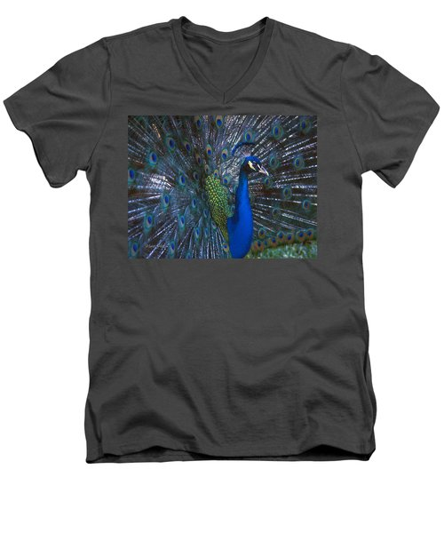 Men's V-Neck T-Shirt featuring the photograph Peacock Splendor by Marie Hicks