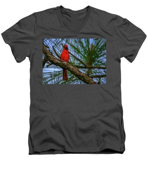 Perched Cardinal Men's V-Neck T-Shirt