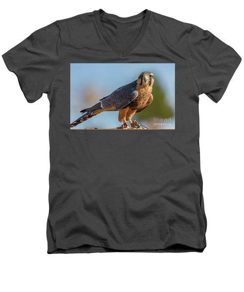 Peregrine Falcon Wildlife Art By Kaylyn Franks Men's V-Neck T-Shirt