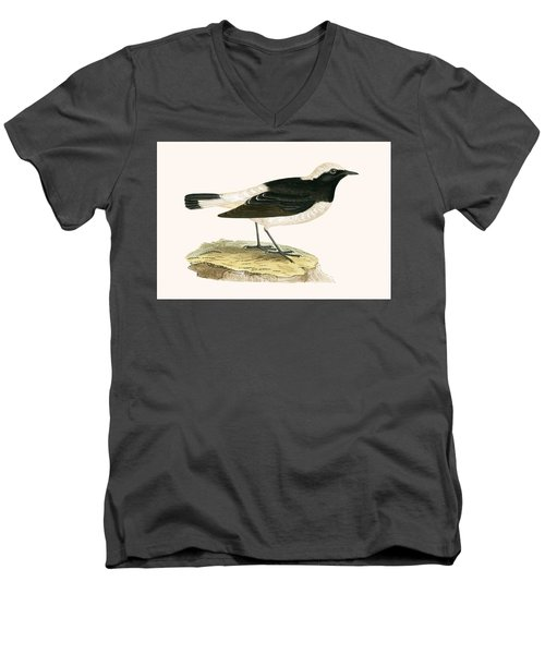 Pied Wheatear Men's V-Neck T-Shirt by English School
