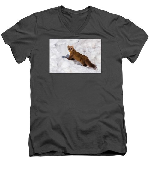Pine Marten In Snow Men's V-Neck T-Shirt by Yeates Photography