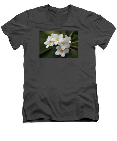 Plumeria - Golden Hearts Men's V-Neck T-Shirt