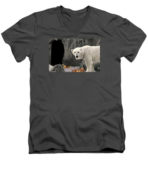 Polar Bear 101 Men's V-Neck T-Shirt by Diana Angstadt