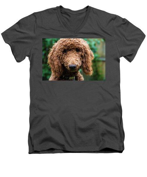 Men's V-Neck T-Shirt featuring the photograph Poodle Pup by Jennifer Ancker