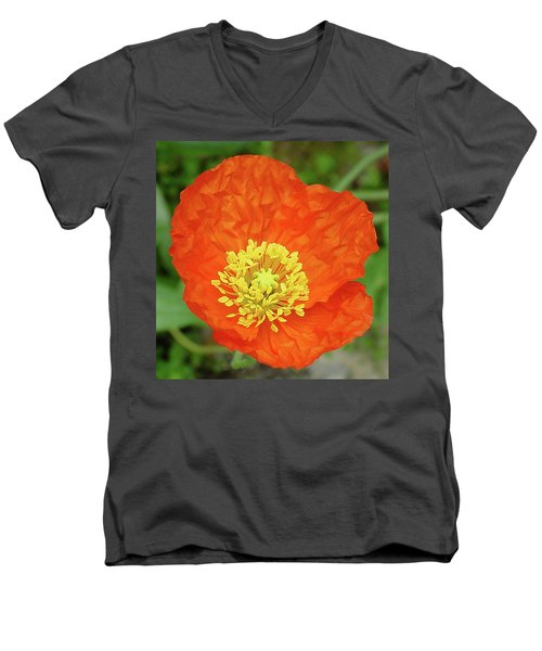 Poppy Men's V-Neck T-Shirt