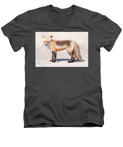 Portrait Of A Red Fox Men's V-Neck T-Shirt