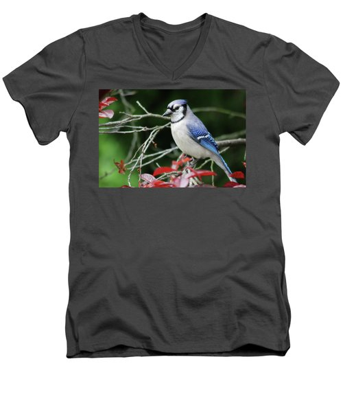 Pretty Blue Jay Men's V-Neck T-Shirt