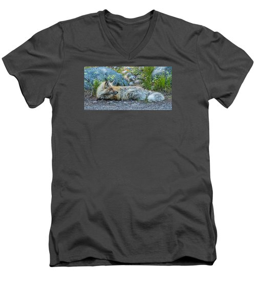 Men's V-Neck T-Shirt featuring the photograph Pretty Boy Fox In Spring by Yeates Photography