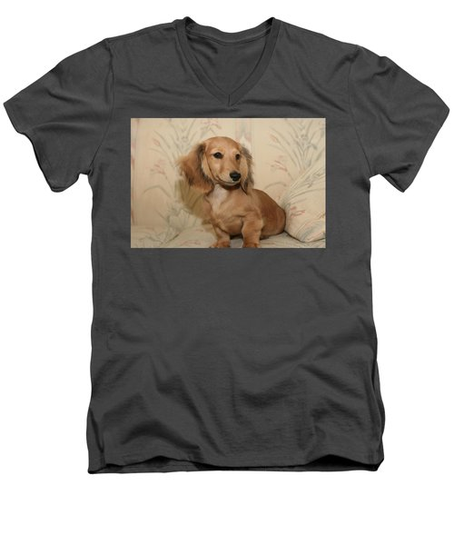 Pretty Pup Men's V-Neck T-Shirt