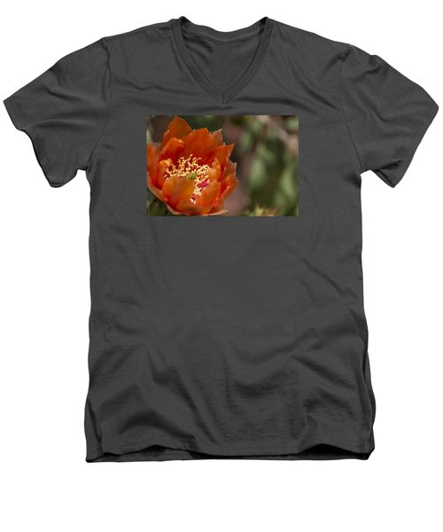 Men's V-Neck T-Shirt featuring the photograph Prickly Pear Bloom by Laura Pratt