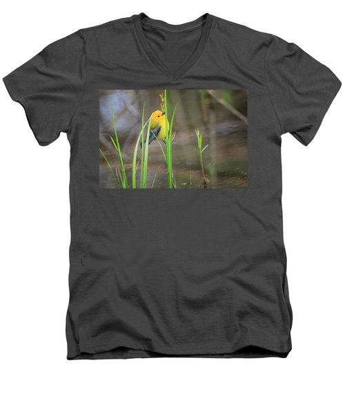 Prothonotary Warbler 5 Men's V-Neck T-Shirt by Gary Hall