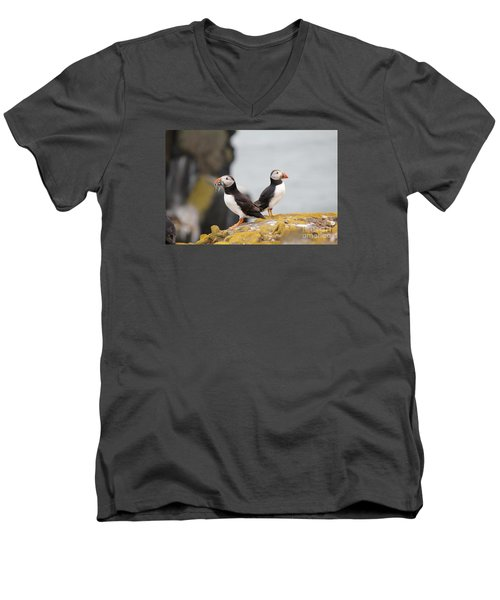 Men's V-Neck T-Shirt featuring the photograph Puffin's by David Grant