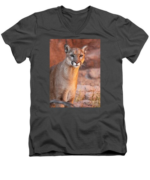 Men's V-Neck T-Shirt featuring the photograph Puma At Sunset by Max Allen