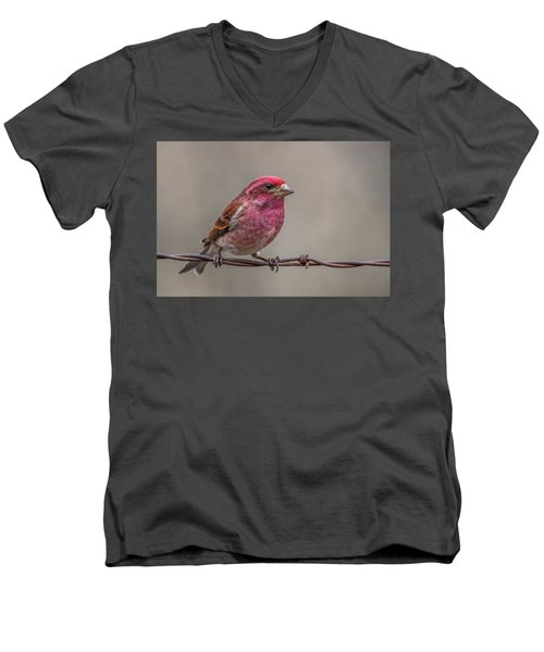 Men's V-Neck T-Shirt featuring the photograph Purple Finch On Barbwire by Paul Freidlund