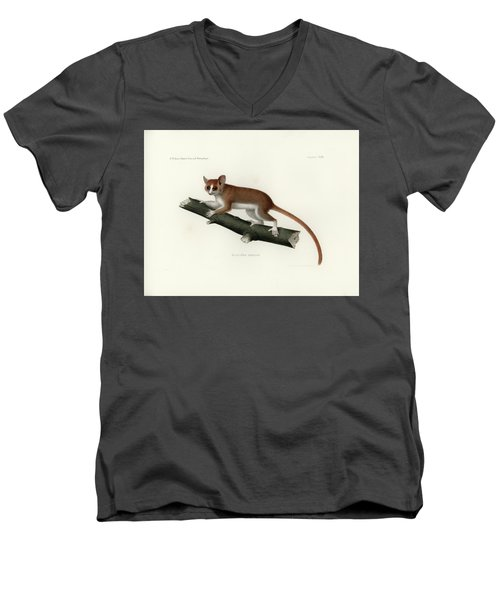 Pygmy Mouse Lemur Men's V-Neck T-Shirt by Hugo Troschel