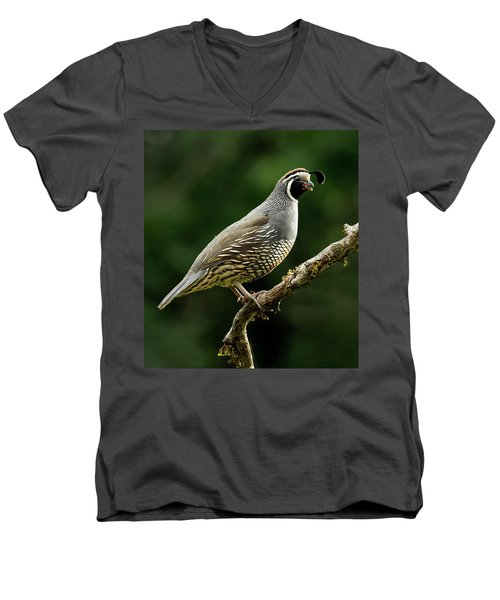 Quail  Men's V-Neck T-Shirt by Inge Riis McDonald