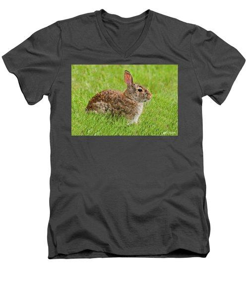 Rabbit In A Grassy Meadow Men's V-Neck T-Shirt
