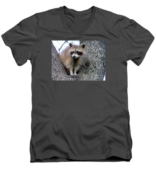 Raccoon Lookout Men's V-Neck T-Shirt by Susan  Dimitrakopoulos