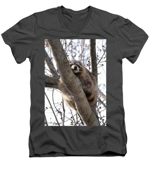 Afternoon Nap-raccoon Up A Tree  Men's V-Neck T-Shirt