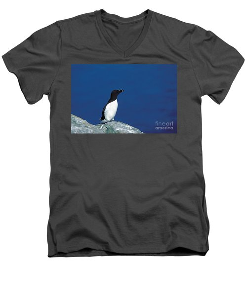 Razor-billed Auk Alca Torda Men's V-Neck T-Shirt
