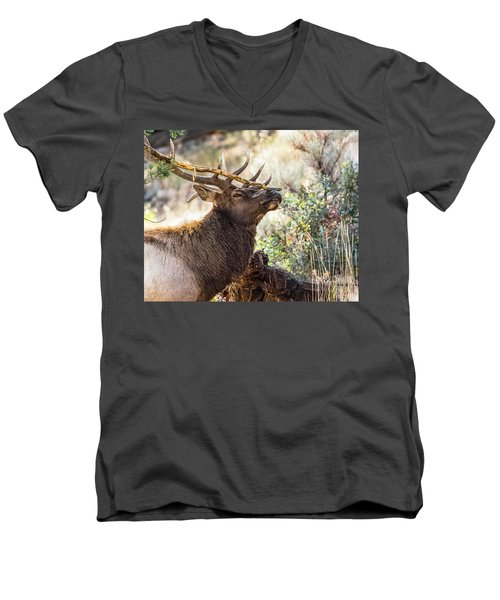 Ready For Rut Men's V-Neck T-Shirt by Yeates Photography