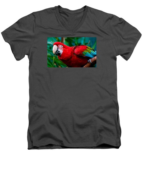 Red And Green Macaw Men's V-Neck T-Shirt