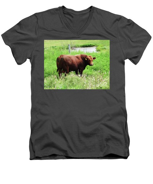 Men's V-Neck T-Shirt featuring the photograph Red Angus Bull by J L Zarek