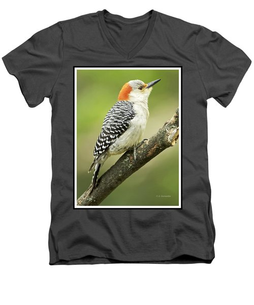 Red Bellied Woodpecker, Female On Tree Branch Men's V-Neck T-Shirt