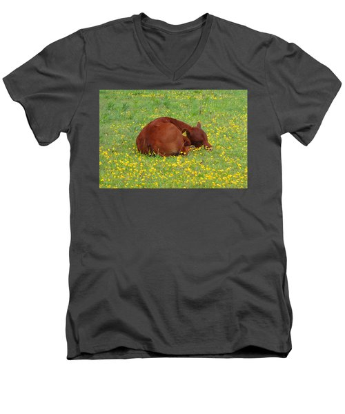 Red Calf In The Buttercup Meadow Men's V-Neck T-Shirt