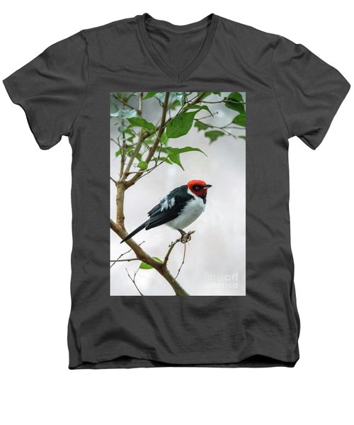 Red Capped Cardinal 2 Men's V-Neck T-Shirt