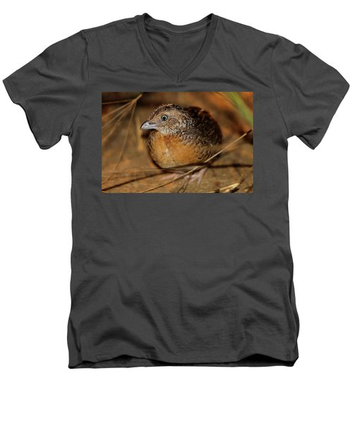 Red-chested Button-quail Men's V-Neck T-Shirt