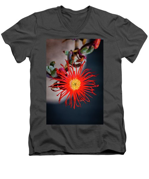 Men's V-Neck T-Shirt featuring the photograph Red Crab Flower by Bruno Spagnolo