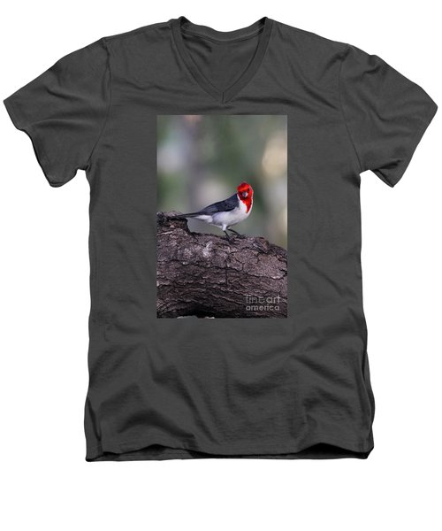 Red Crested Posing Men's V-Neck T-Shirt