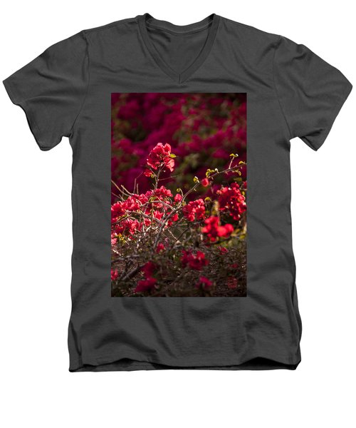 Men's V-Neck T-Shirt featuring the photograph Red Flowering Quince Schrub by Daniel Hebard