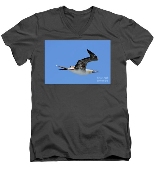 Men's V-Neck T-Shirt featuring the digital art Red Footed Booby Bird 2 by Eva Kaufman